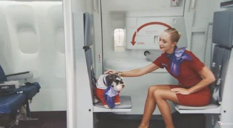 canine-crew-1